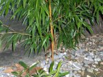 Bambussanierung03.jpg